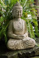 Sitting Buddha statue and Blechnum - Hard Fern plant in backyard garden