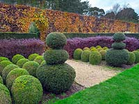 Topiary box balls, clipped yew, hornbeam and purple Berberis hedges East Ruston Old Vicarage Norfolk.