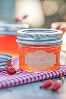 Confiture d'eglantines - Rosehip Jelly in glass jars on table top with gingham table cloth and rose hips.