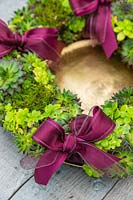 Succulent wreath on gold plate with Sempervivum Bronco, Crassula and red ribbons on rustic table top