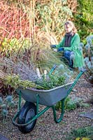 Wheelbarrow full of Winter cuttings with woman in background cutting back and tidying a gravel garden