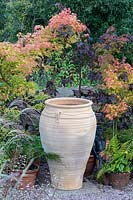 Terracotta urn in front of potted Acer - Maple