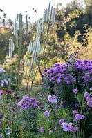 Section of flower bed with Aster and Anemone