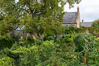 Ancient Pyrus - Pear - tree, Buxus - Box - topiary, Malus 'Kidd's Orange Red' - Apple, house beyond