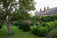Box topiary in garden at Yews Farm, Martock, Somerset