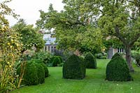 Bishop's mitre Box topiary in the autumnal garden at Yews Farm, Martock