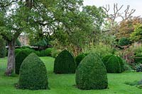 Buxus topiary, Bishop's mitres - Yews Farm, Martock