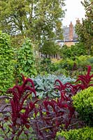 Overview of the vegetable garden with red Amaranthus