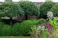 Laurus nobilis 'mushrooms', Penstemon 'Raven', and tobacco plant Nicotiana sylvestris