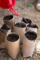 Watering newly planted seeds in paper pot containers
