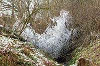 Frozen dripping branches on fallen tree over stream