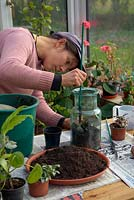 Woman using a long handled spoon to excavate a hole and fill in compost around the roots of houseplant in bottle garden.