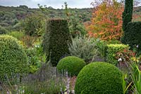 Topiary in formal area of cottage garden in September