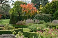 Formal parterre, with Acer japonicum 'Vitifolium' in October