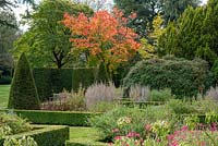 Seen over a parterre an Acer japonicum 'Vitifolium', the downy Japanese maple, in full autumn colour stands behind a clipped yew alcove and bench.