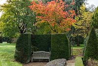 Acer japonicum 'Vitifolium' behind a clipped yew alcove and bench.