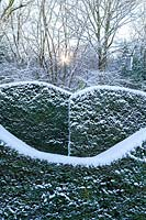 Snow-covered wave-form hedge of Taxus baccata in the Hedge Gardens. Garden – Veddw