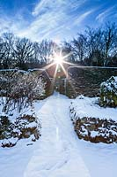 Snow-covered Yew Walk contre-jour. Hedges of Taxus baccata. Garden – Veddw