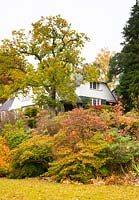 A towering oak tree and autumn foliage on Azalea, Cornus kousa, Acer, underplanted with Hosta around the Arts and Crafts style house at High Moss, Portinscale, Cumbria, UK