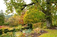 The view from a stone terrace over Taxus baccata topiary, Fagus sylvatica hedge and autumn foliage on oak trees at High Moss, Portinscale, Cumbria, UK