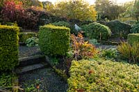 A gravel garden with clipped cubes of Taxus baccata surrounded by herbaceous plants - Windy Hall