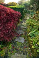 Acer palmatum and ferns in the 'Best' Garden at Windy Hall