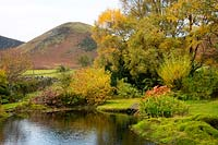 A pond surrounded by mounds of moss, Nympahaea zenkeri and sycamore trees. A view toward The Tongue in the northern fells at Chapelside, Mungrisdale, Penrith, Cumbria, UK