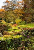 Cotoneaster and clematis growing on a moss covered stone wall surrounded by autumn foliage