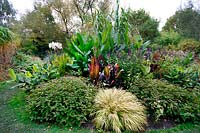Canna tropicanna, Salvia 'Amistad', Musa ventricosum, and Hakonechloa macra 'Aureola' at Birmingham Botanical Gardens and Glasshouses, October