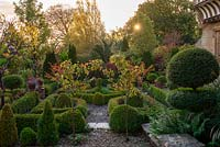At dawn, a formal parterre created from clipped box hedges, balls and standards, with the red autumn foliage of small flowering almonds, Prunus triloba.