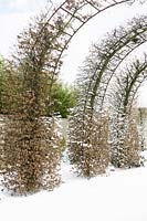 Round arch shaped hedges covered and in snow.