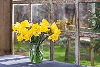 Narcissus - daffodils displayed in vase on windowsill.