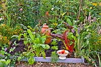 Mixed vegetable bed with cabbage seedlings, beetroots, lettuces and swiss chard. Colander with picked tomatoes.