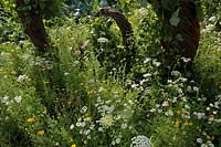 Willow sculptures and wildflower meadow plants - Ammi majus, Ox Eye Daisy and Corn Mariglold - Blind Veterans UK.  It's All About Community Garden, RHS Hampton Court Palace Flower Show, 2017.