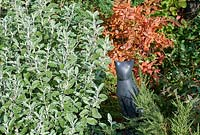 Black cat ornament stands in border with Brachyglottis 'Sunshine' with Berberis sieboldii in autumn.