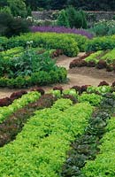 Formal vegetable garden with rows of lettuces.