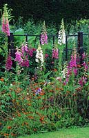 Early summer border with Digitalis - Foxgloves