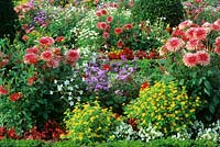 Mixed Summer border planting includes, begonias, Nicotiana tabacum, Dahlia