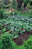 Vegetable garden with a box border