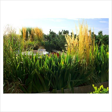 Gap photos garden plant picture library square metal for Ornamental grass in containers for privacy