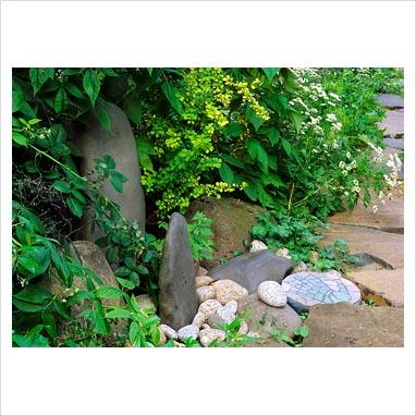plantar piedras 0020261