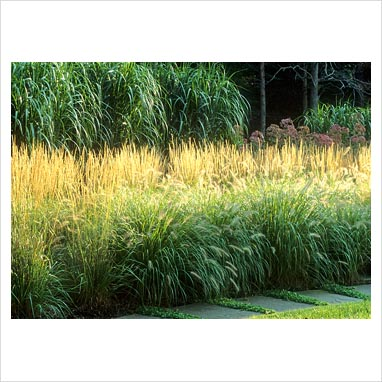 Gap photos garden plant picture library grass border for Tall grass border