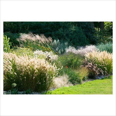 Gap photos garden plant picture library autumn for Small ornamental grasses for borders