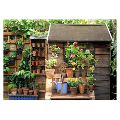Gap photos garden plant picture library plants in for Very small garden sheds