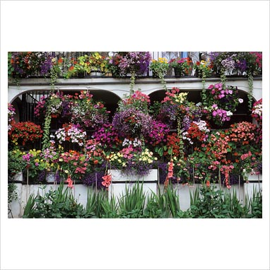 Gap photos garden plant picture library hanging - Hanging baskets for balcony ...