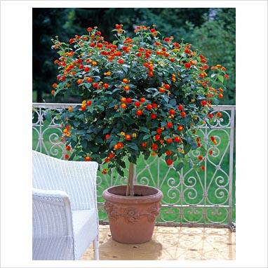 jardin camara web: