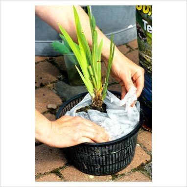 Gap photos garden plant picture library creating a for Plastic pond plants