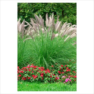 Gap photos garden plant picture library mixed border for Small ornamental grasses for borders