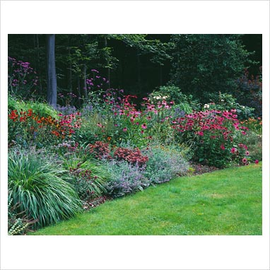GAP Photos Garden Plant Picture Library Woodland