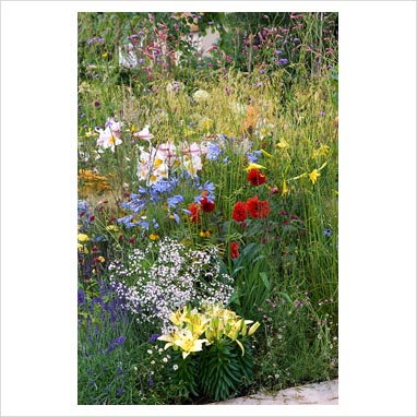 Gap photos garden plant picture library modern for Grasses planting scheme